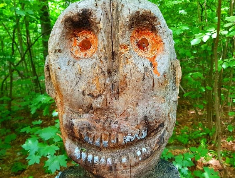 Воронежцы нашли деревья похожие на лики древних богов