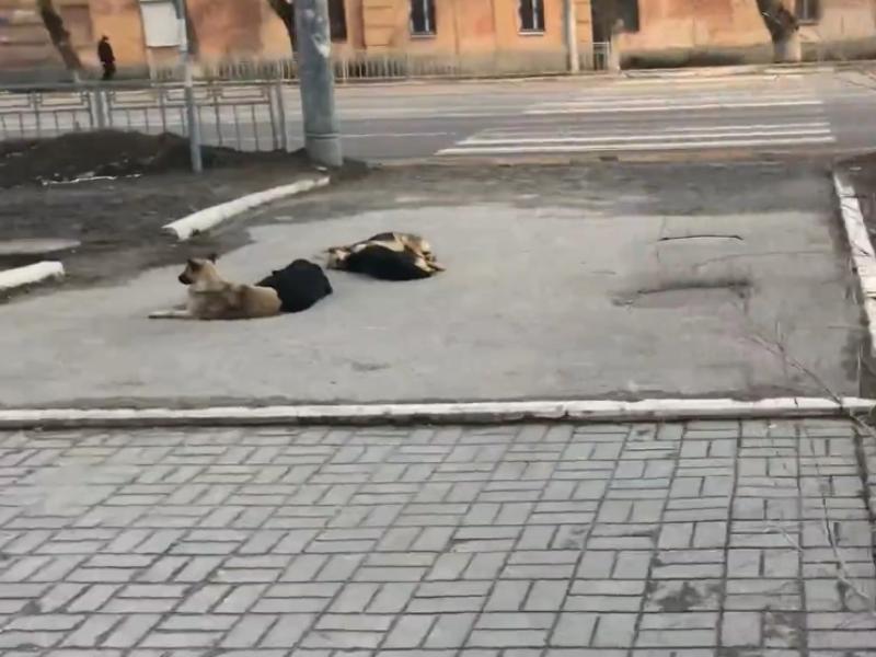 Собачий патруль у школы в Воронеже держит родителей в страхе