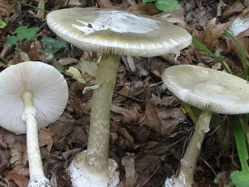 Восемь человек умерли после отравления грибами в Воронежской области