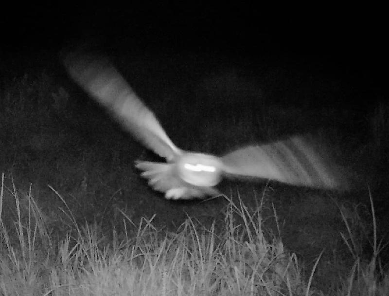 Мистический снимок запечатлела фотоловушка Воронежского заповедника