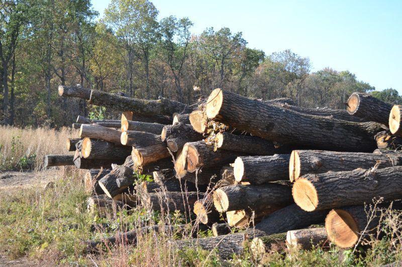 Воронежцы сообщили о безжалостной вырубке 400-летнего леса