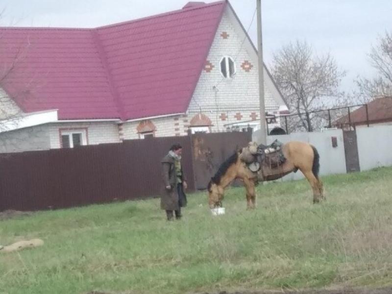 Путешествующую на коне итальянку заметили под Воронежем