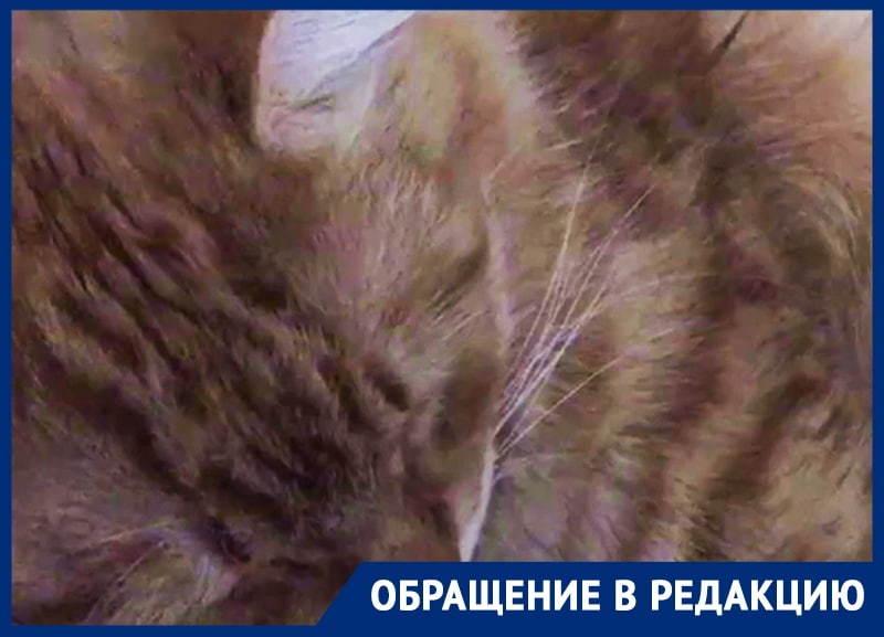 Милейший храп уникального кота сняли на видео в Воронеже