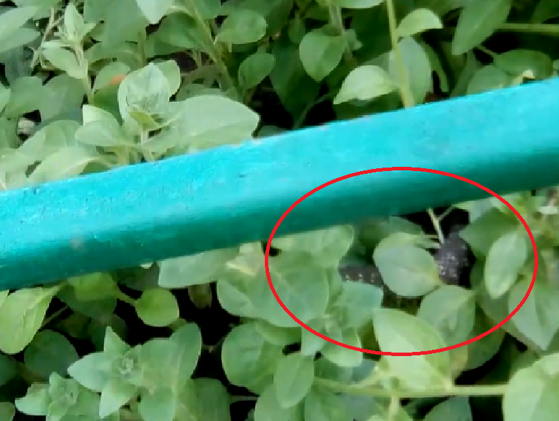 Огромная агрессивная змея кинулась на женщину в Воронежской области