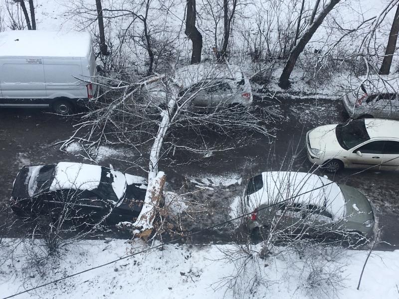 Дряхлое дерево разгромило иномарки в Воронеже