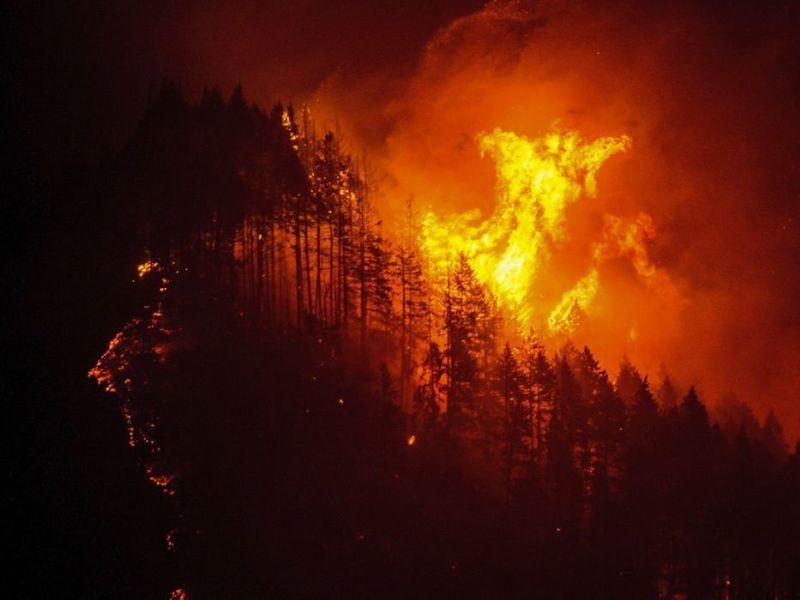 Воронежская область оказалась второй в ЦФО по числу лесных пожаров