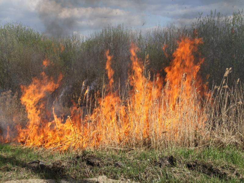 Количество лесных пожаров сократилось в Воронежской области