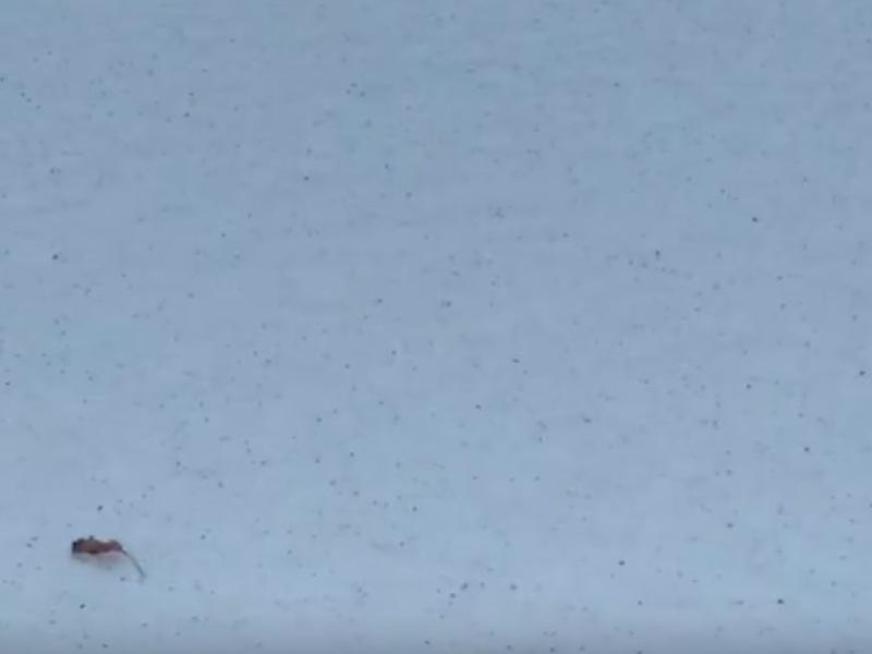 Пепельный снегопад накрыл город в Воронежской области