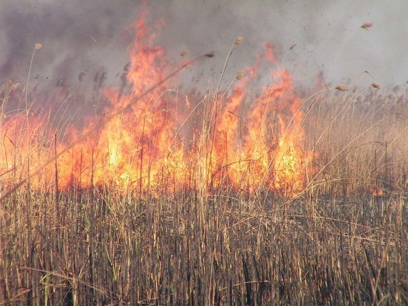 ВВоронежской области произошел 1-ый за2017 год ландшафтный пожар