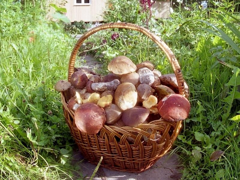 В Воронеже увеличилось число умерших от отравления грибами