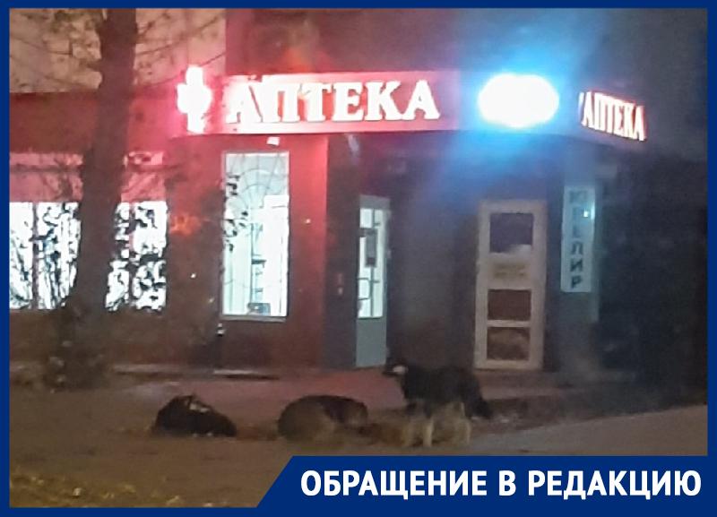Свора собак нападает на прохожих у воронежской аптеки