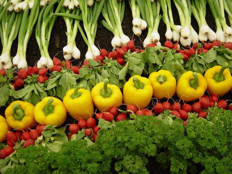 Программу развития органического земледелия раскритиковали в Воронеже