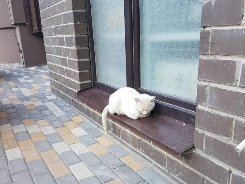 Воронежец проехался по спящему коту на машине и попал на фото