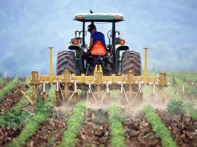 Воронежские власти заявили о намерении поддержать малых фермеров