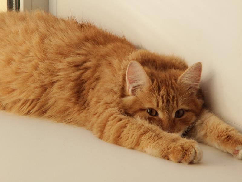 Воронежцы отличились жалостью к беспородным кошкам