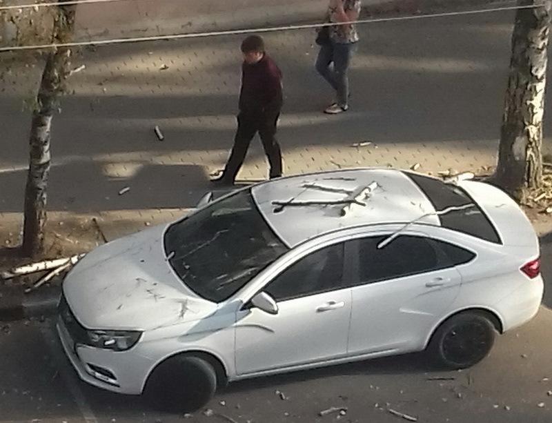 В центре Воронежа упавшая сухая ветка разбила «Ладу Весту»