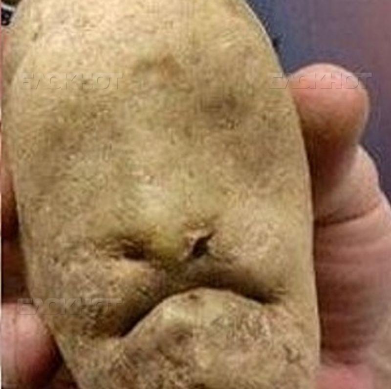 Воронежская область стала самым «картофельным» регионом РФ