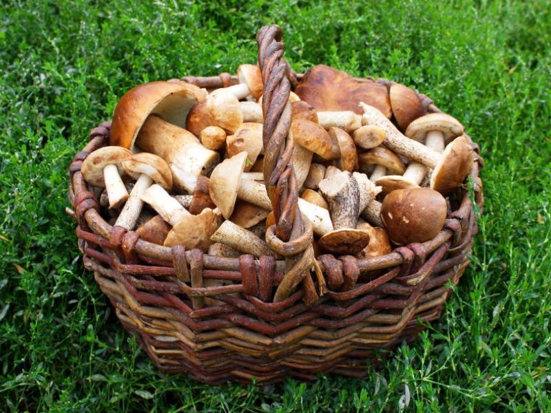 Пять воронежцев отравились грибами в 2019 году