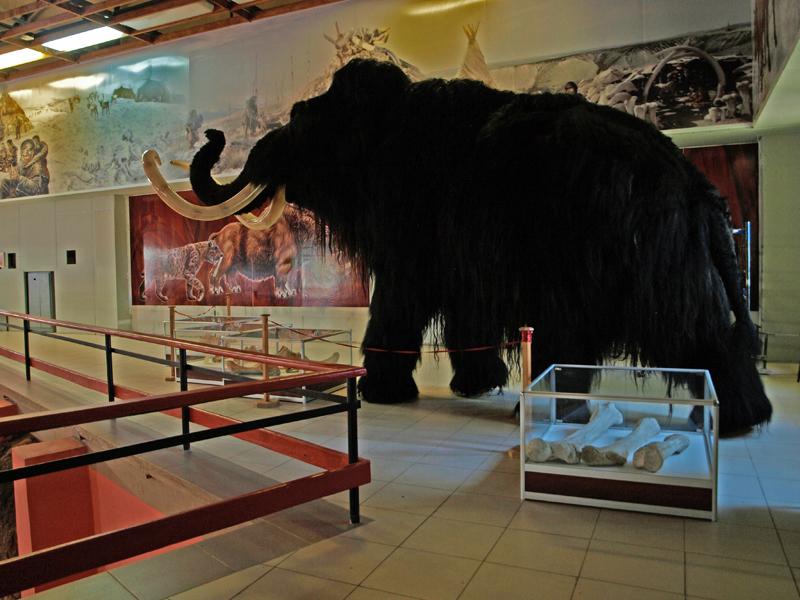 Воронежский музей «Костенки» приглашает наоткрытие сезона под рев мамонта