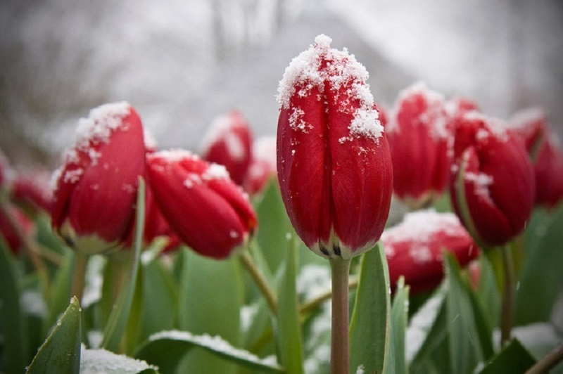 Заморозки с солнечной погодой придут в Воронеж
