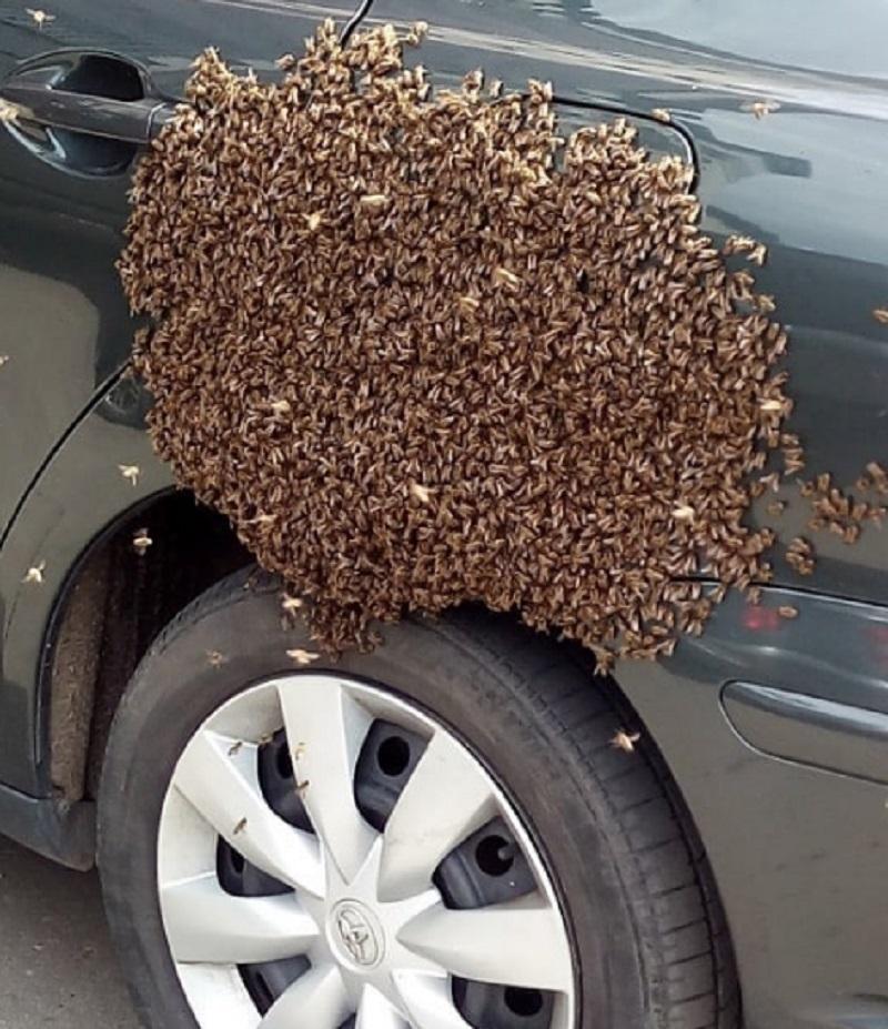 Тысячи пчел атаковали бензобак машины в Воронеже