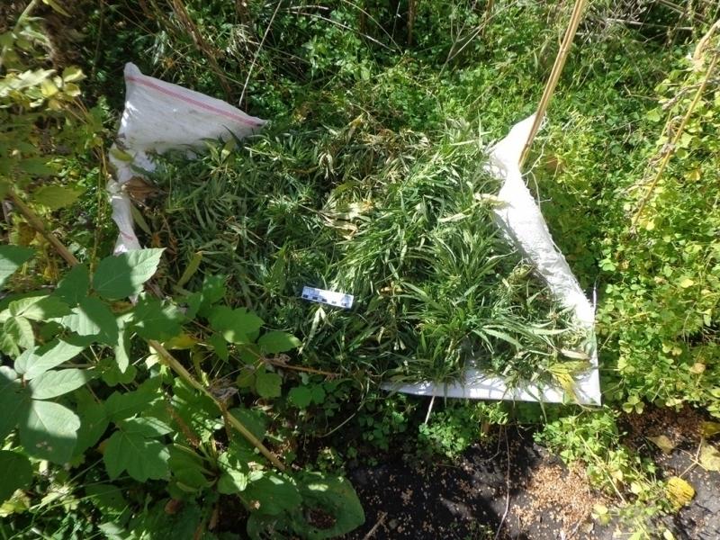 Конопля в воронежской области есть ли глюки от марихуаны