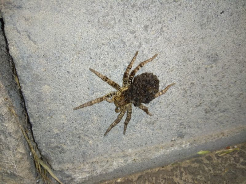 Жирные тарантулы атаковали жилой комплекс под Воронежем