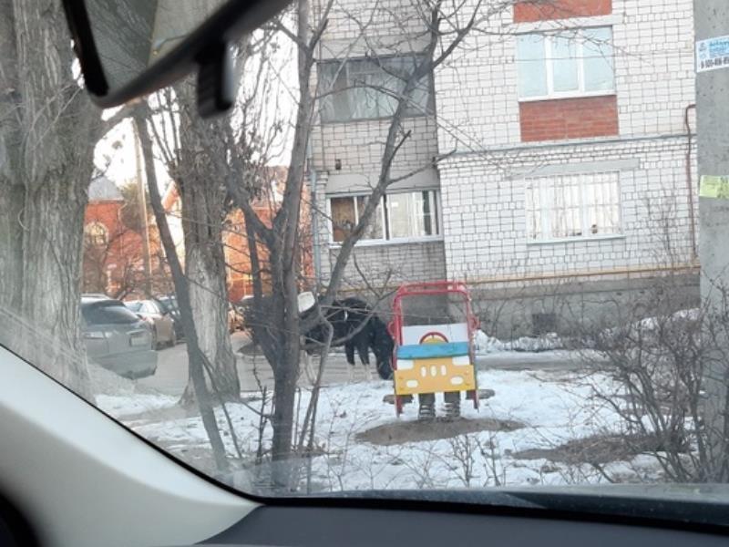 Лошади заполонили двор в спальном районе Воронежа