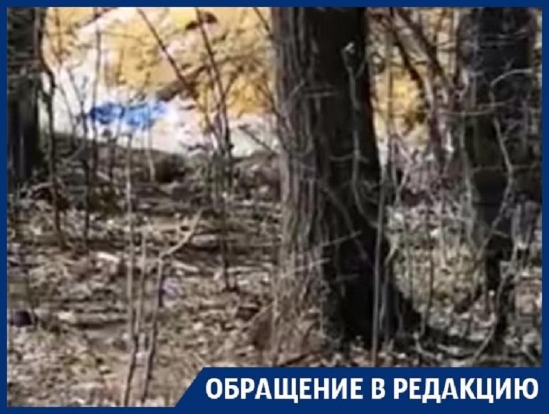 Деревья на трассе «Воронеж-Курск» превратили в сборщиков мусора