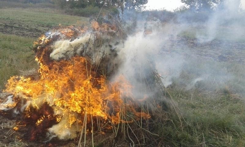 ВВоронежской области сожгли 750кг дикорастущей конопли