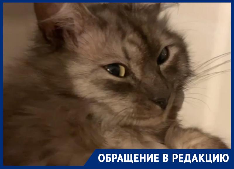 В нереальной позе застали саблезубого курильского кота в холодильнике в Воронеже