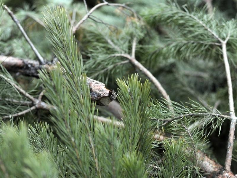 В Воронежской области с поличным задержали черных лесорубов