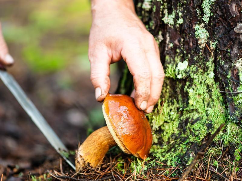 Разгневанная женщина вонзила нож для грибов в воронежца и убежала