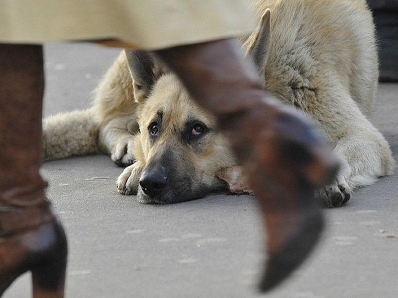 В Воронеже создали специальный Совет по бездомным животным