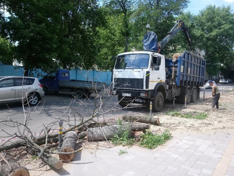 Где в Воронеже вырубят 250 опасных деревьев