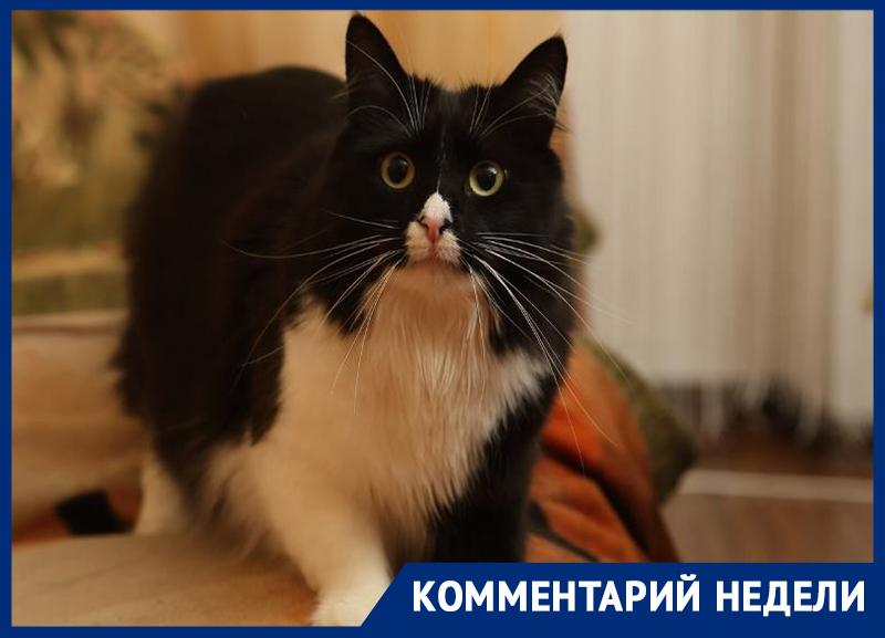Воронежский зоозащитник встал на сторону чипирования домашних животных