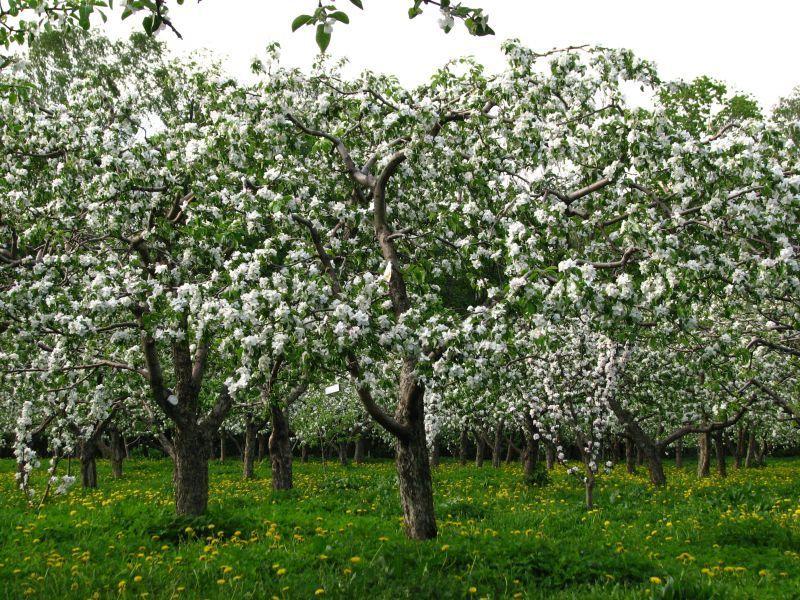 Мэрия Воронежа вернулась к идее развивать скандально известную часть яблоневого сада
