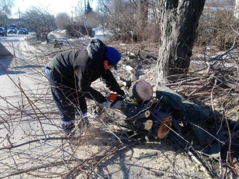 В Воронеже весной уничтожат 189 деревьев