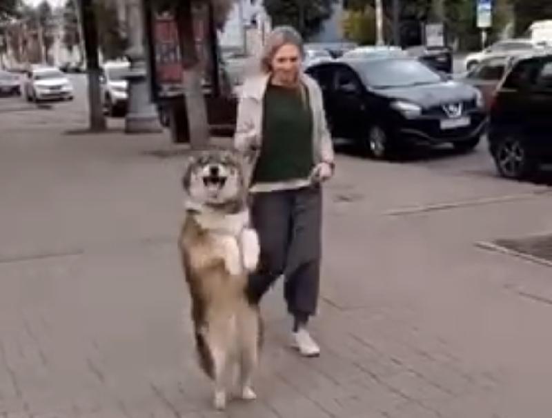 Собака-кенгуряка стала звездой соцсетей в Воронеже