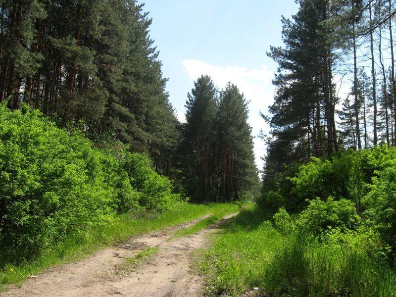 Больше 1,7 га нового леса посадят в Воронежской области