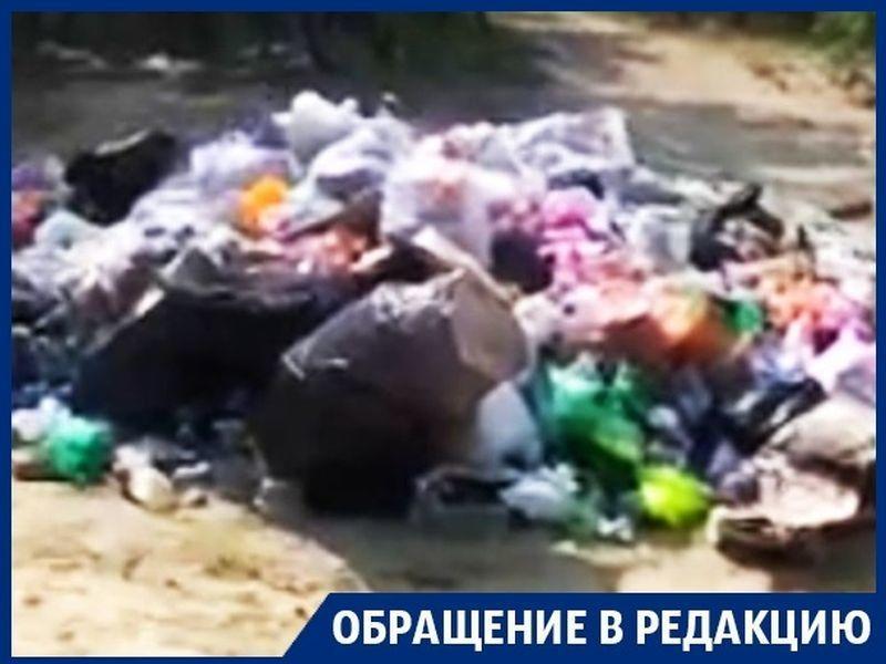 Частный пляж под Воронежем превратили в зловонную свалку