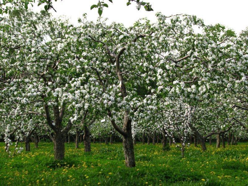Воронежцев позвали обсудить застройку яблоневых садов