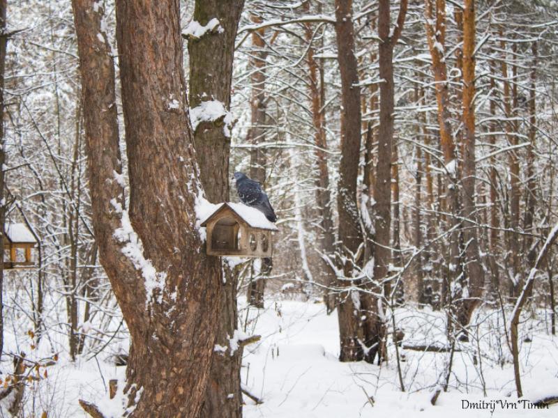 Красоту зимнего утра в Воронеже сказочно показали на фото