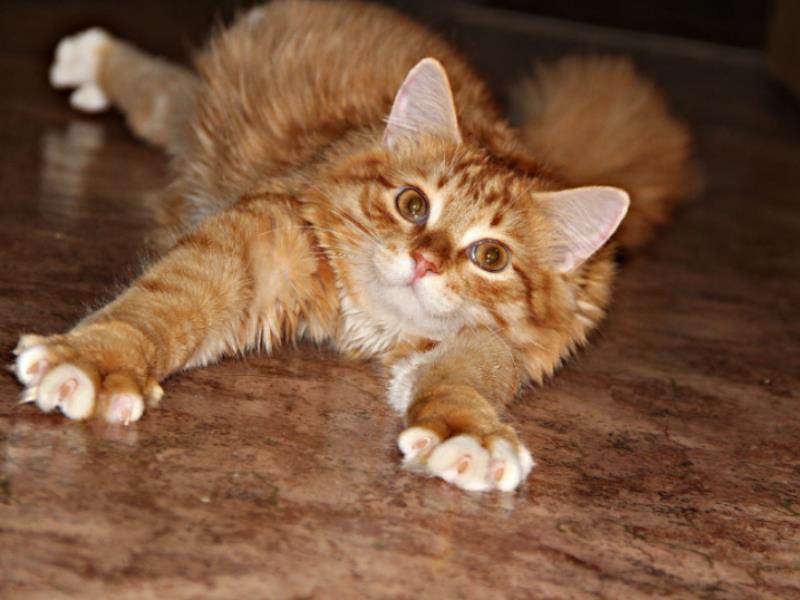 Кошки выбили для Воронежа первое место по стоимости временного приюта