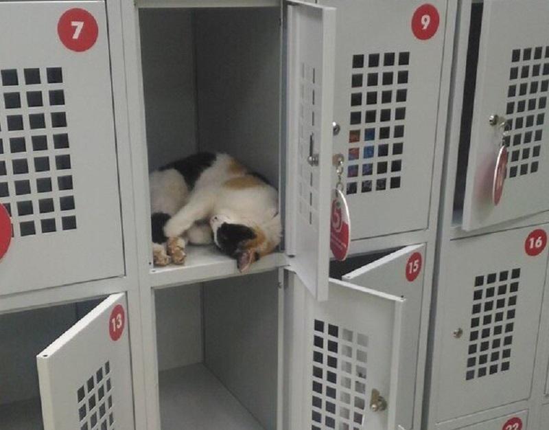 Тюрьму для котов обнаружили в супермаркете в Воронеже