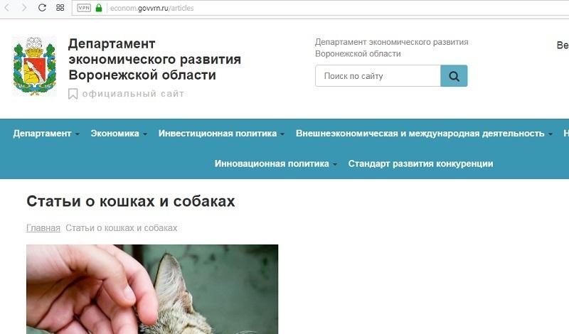 Как прекратить мяуканье кошек, учат чиновники в Воронеже