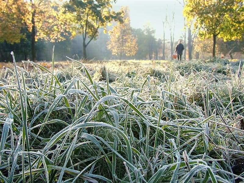 Cотрудники экстренных служб предупредили воронежцев озаморозках 28сентября