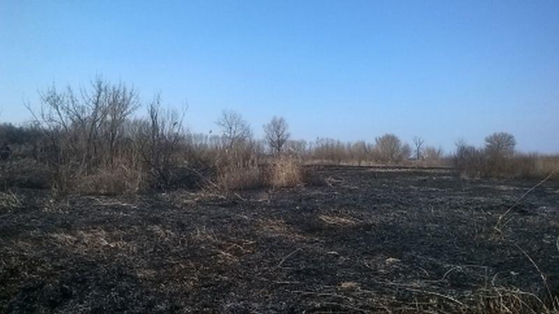 Спасавшийся отгадюк гражданин Воронежской области устроил мощный пожар