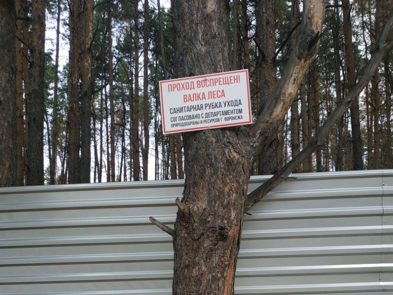 Власти приостановили вырубку Северного леса Воронежа