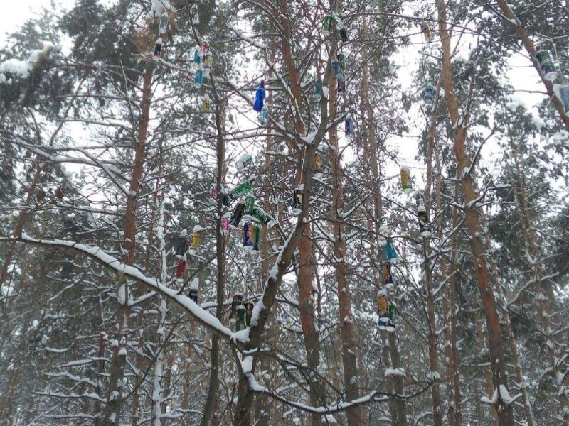Украшенное алкоголиками дерево нашли в Воронеже